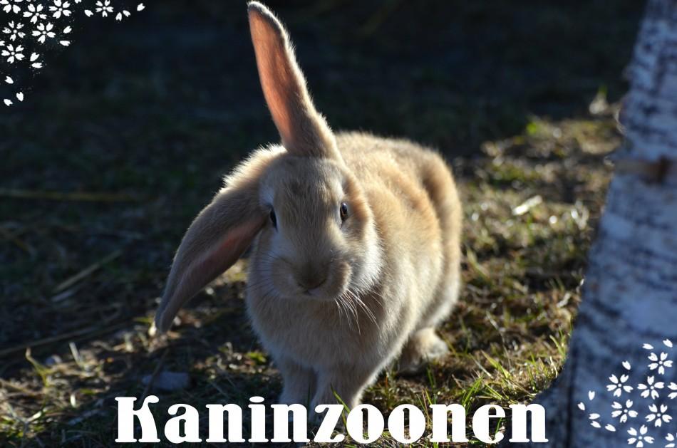 kaninzoonen